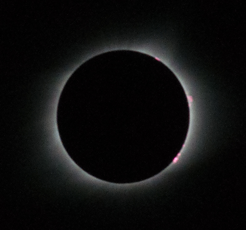 Prominences shown in pink around the edge of the eclipse